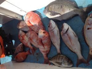 fish-braai-tonight