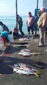 fish-harbour